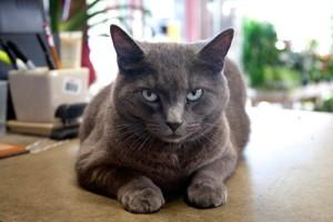 The Shoal Creek Nursery Cat.